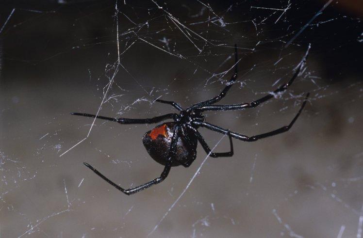 """Thanh niên """"đen hết chỗ nói"""" vì hai lần bị nhện độc cắn vào """"của quý"""" - 1"""