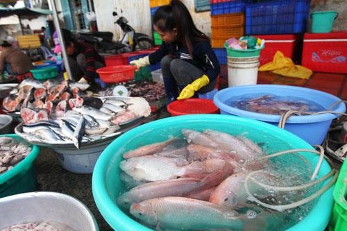 Còn nhiều loại cá nhiễm chất cấm - 1