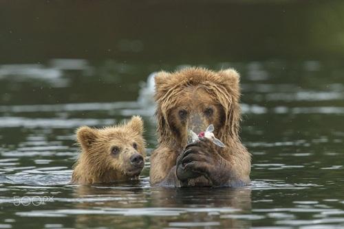 Học hỏi được gì từ cách dạy con của loài gấu - 4