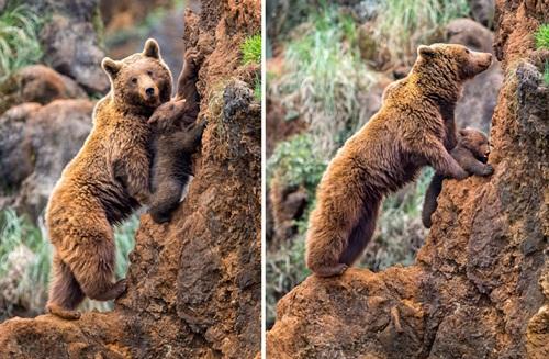 Học hỏi được gì từ cách dạy con của loài gấu - 7