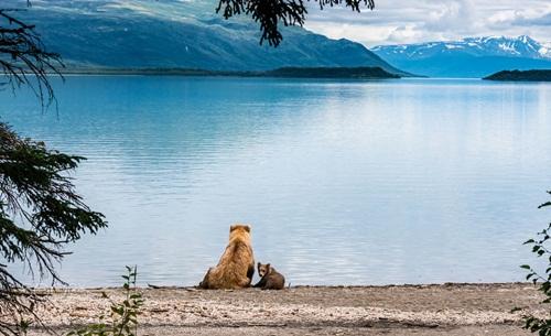 Học hỏi được gì từ cách dạy con của loài gấu - 8