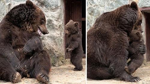 Học hỏi được gì từ cách dạy con của loài gấu - 10