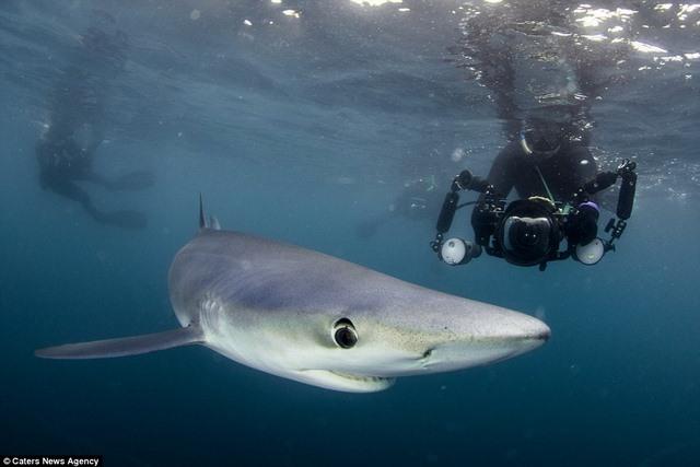 Chụp được cá mập xanh cực hiếm ngoài khơi nước Anh - 1