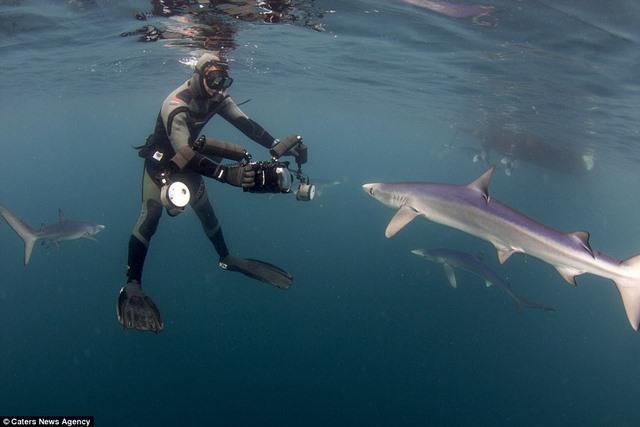 Chụp được cá mập xanh cực hiếm ngoài khơi nước Anh - 5