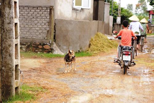 Vụ một phụ nữ chết vì chó cắn: Dân sống trong sợ hãi - 2