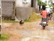 Vụ một phụ nữ chết vì chó cắn: Dân sống trong sợ hãi
