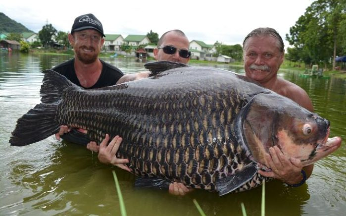 Câu được cá chép khổng lồ nặng nhất thế giới ở Thái Lan - 1