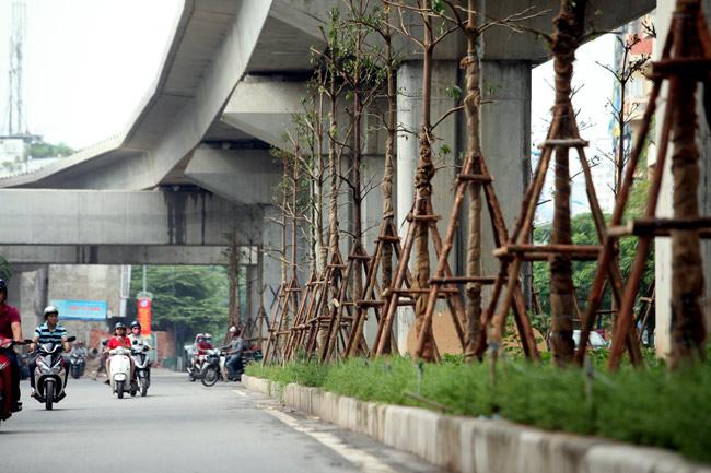 Vì sao Hà Nội trồng cây xanh dưới gầm đường sắt? - 1
