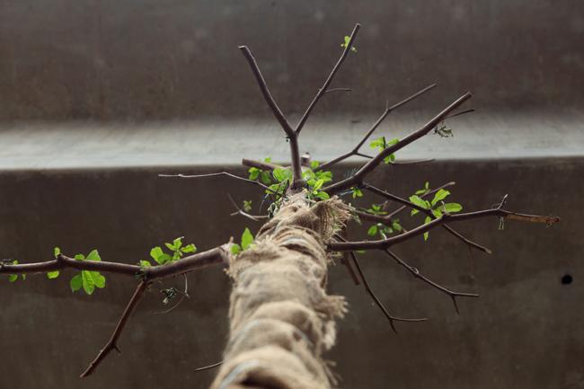 Vì sao Hà Nội trồng cây xanh dưới gầm đường sắt? - 4