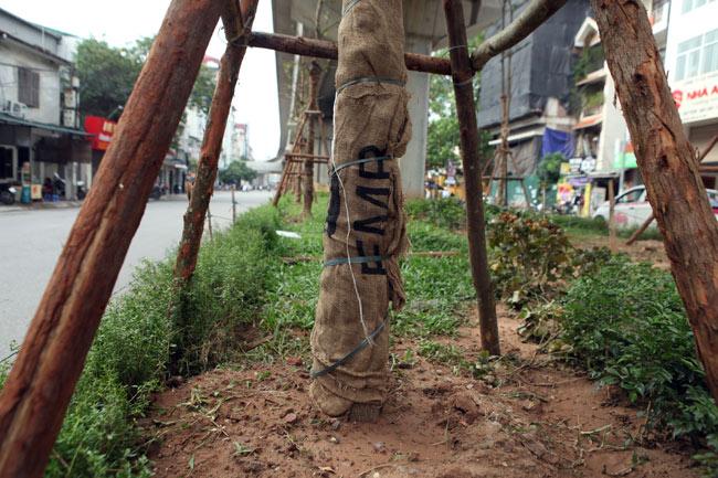 Vì sao Hà Nội trồng cây xanh dưới gầm đường sắt? - 6