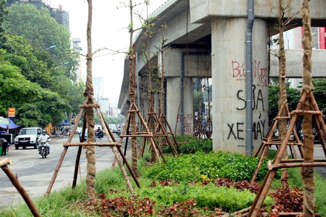 Vì sao Hà Nội trồng cây xanh dưới gầm đường sắt? - 7