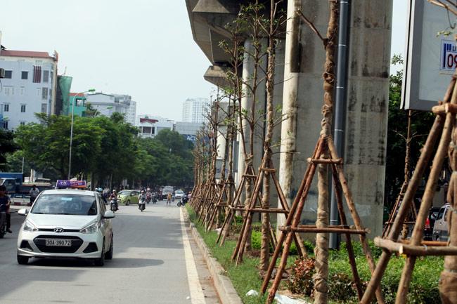 Vì sao Hà Nội trồng cây xanh dưới gầm đường sắt? - 8