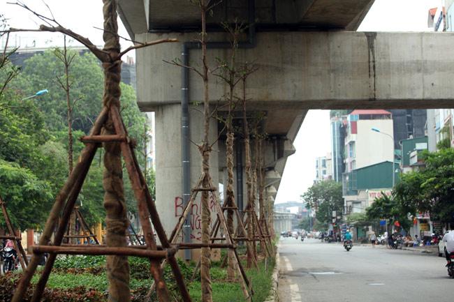 Vì sao Hà Nội trồng cây xanh dưới gầm đường sắt? - 2