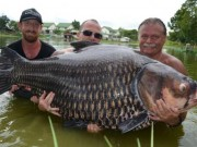 Câu được cá chép khổng lồ nặng nhất thế giới ở Thái Lan