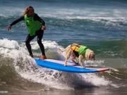 Cuộc thi lướt sóng dành riêng cho những chú cún