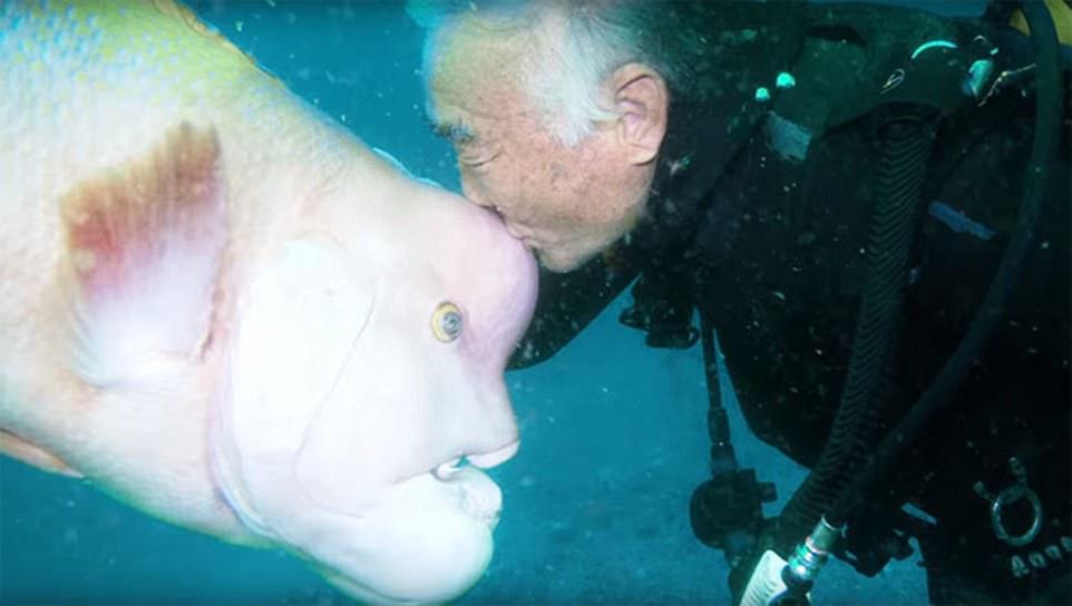 Nhật Bản: Cá khổng lồ 25 năm cho ân nhân ôm ấp, vuốt ve - 2