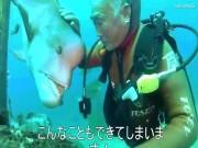 Thế giới - Nhật Bản: Cá khổng lồ 25 năm cho ân nhân ôm ấp, vuốt ve