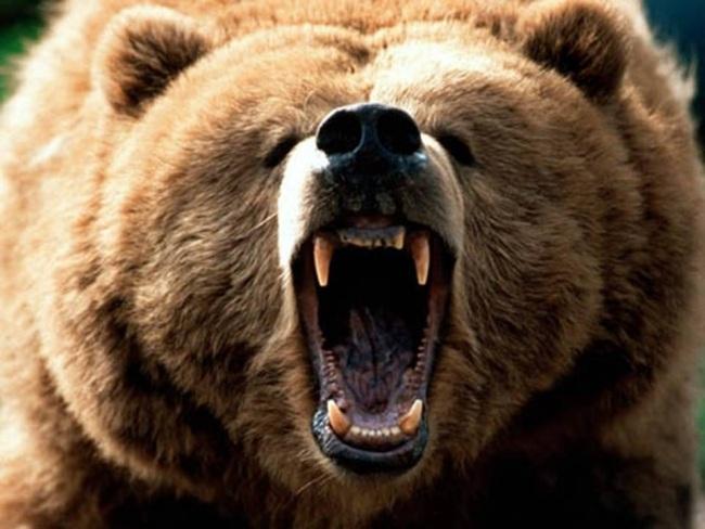 Mỹ: Bé trai 11 tuổi bắn chết gấu dữ để bảo vệ gia đình - 2