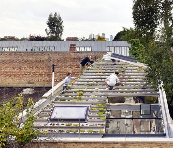 """Không phải núi, ở thành phố cũng có """"vườn bậc thang"""" trên mái - 9"""