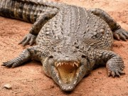Thế giới - Con cá sấu giết, ăn thịt 300 người, khiếp sợ nhất thế giới