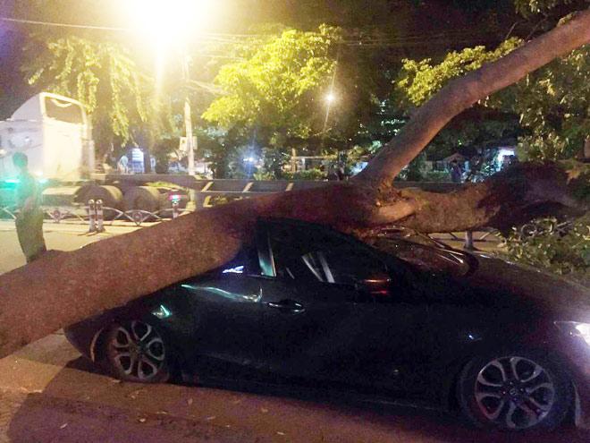 """TP.HCM: Ô tô bị cây cổ thụ """"hạ gục"""" trong đêm khuya - 1"""