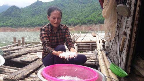 """""""Săn"""" cá hiếm, mỗi năm chỉ có một lần trong lòng hồ sông Đà - 2"""