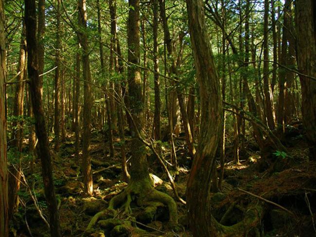 Khu rừng ám ảnh với những vụ tự sát ở Nhật Bản - 1