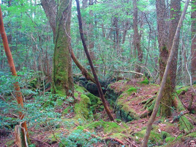 Khu rừng ám ảnh với những vụ tự sát ở Nhật Bản - 2