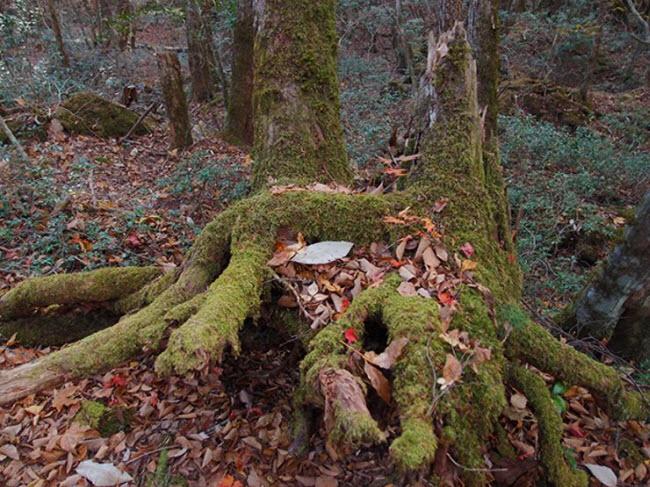 Khu rừng ám ảnh với những vụ tự sát ở Nhật Bản - 6