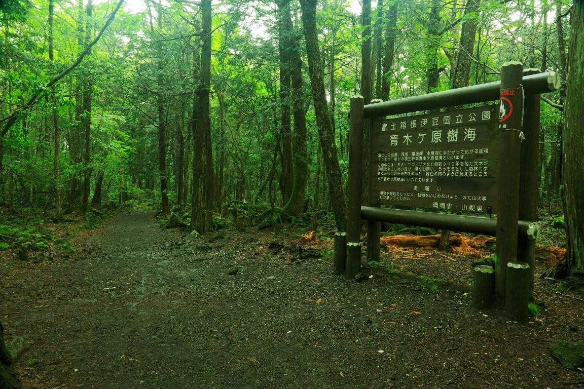 Khu rừng ám ảnh với những vụ tự sát ở Nhật Bản - 3