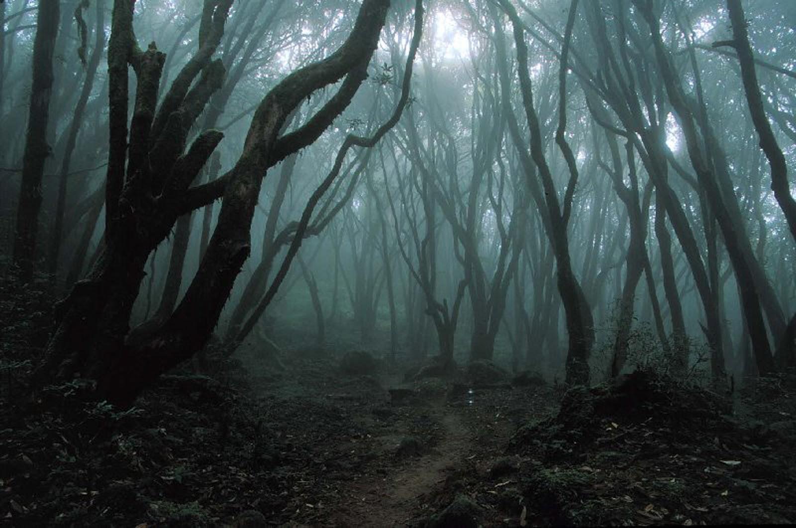 Khu rừng ám ảnh với những vụ tự sát ở Nhật Bản - 4