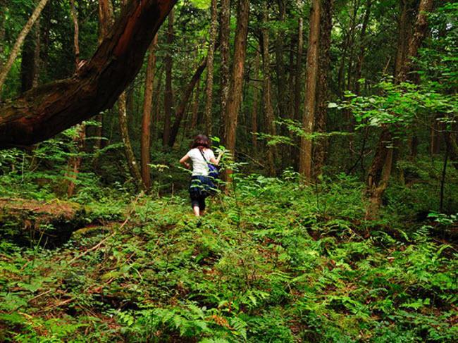 Khu rừng ám ảnh với những vụ tự sát ở Nhật Bản - 7