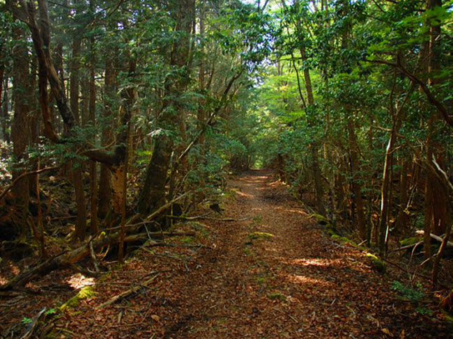 Khu rừng ám ảnh với những vụ tự sát ở Nhật Bản - 8