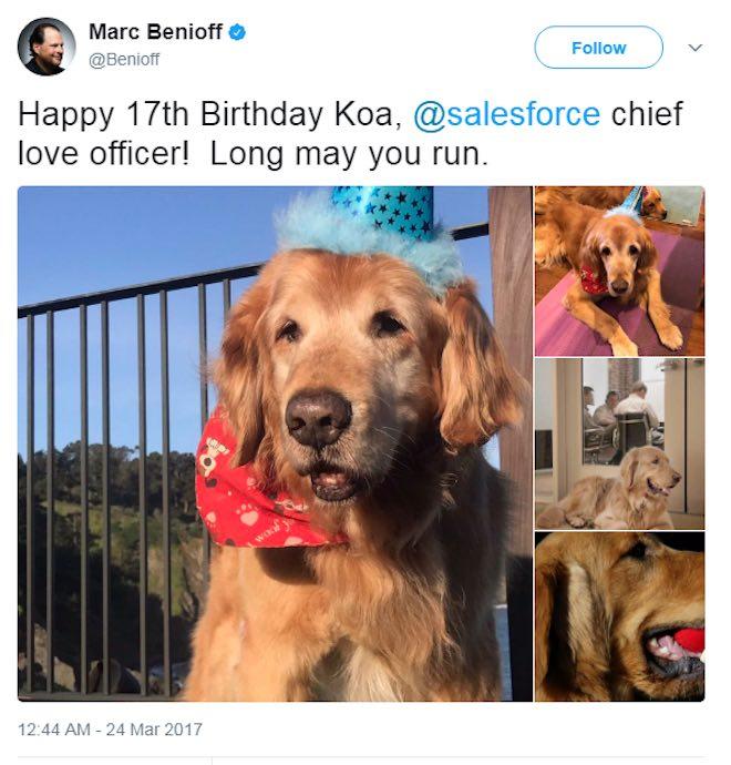 Những chú chó quyền lực nhất giới công nghệ - 5
