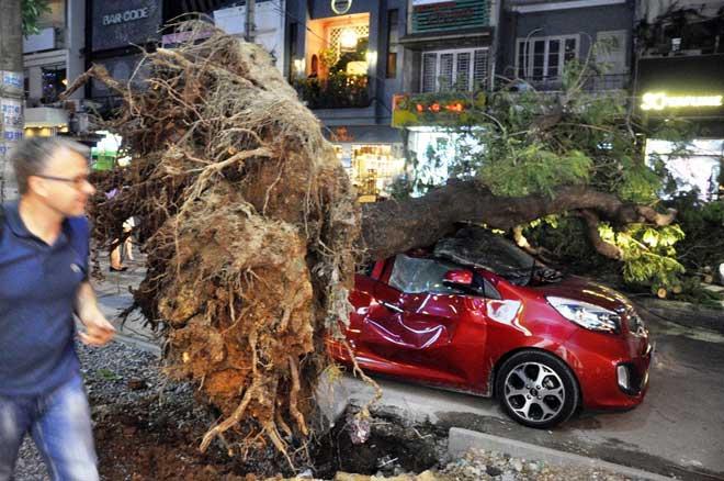 Cây xanh bật gốc đè bẹp ô tô 4 chỗ ở trung tâm Sài Gòn - 1