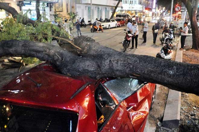 Cây xanh bật gốc đè bẹp ô tô 4 chỗ ở trung tâm Sài Gòn - 3