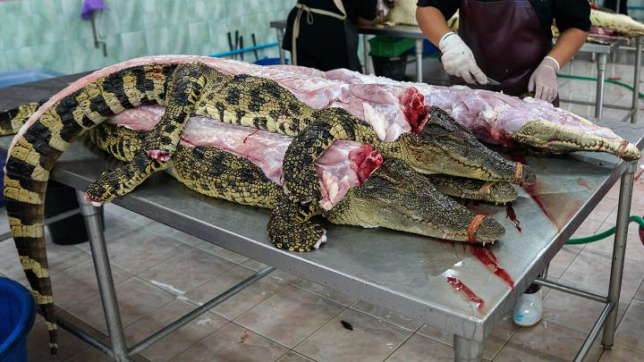 Cảnh nhung nhúc trong trang trại cá sấu lớn nhất Thái Lan - 12