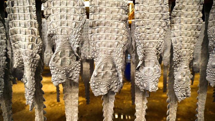 Cảnh nhung nhúc trong trang trại cá sấu lớn nhất Thái Lan - 13