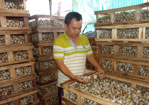 Giá trứng cút rớt thảm còn 200 đ/quả, 20.000 đ mua được cả trăm quả - 1
