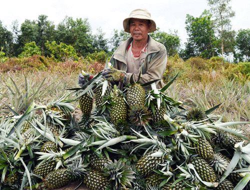 Vựa trái cây miền Tây liêu xiêu vì trái cây Thái Lan - 1