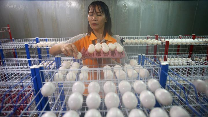Choáng với ngành công nghiệp nuôi cá sấu ở Thái Lan - 4