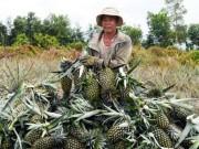 Thị trường - Tiêu dùng - Vựa trái cây miền Tây liêu xiêu vì trái cây Thái Lan