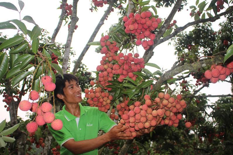 Sửng sốt cây ra quả chi chít ở thân: Lạ mà quen, quen mà lạ - 5