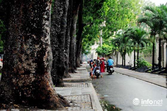 """TP.HCM: Chính thức định đoạt """"số phận"""" 258 cây xanh trên đường Tôn Đức Thắng - 1"""