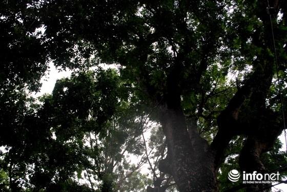 """TP.HCM: Chính thức định đoạt """"số phận"""" 258 cây xanh trên đường Tôn Đức Thắng - 2"""
