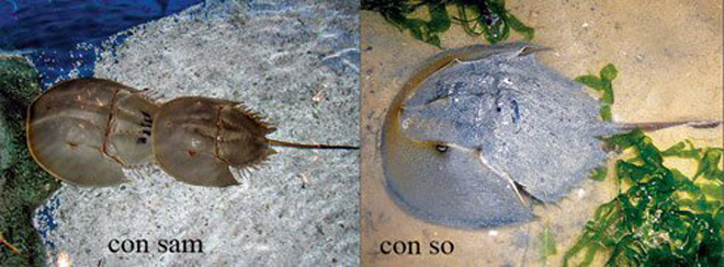 Tránh xa những loại hải sản có lượng độc tố cao gây chết người này - 2