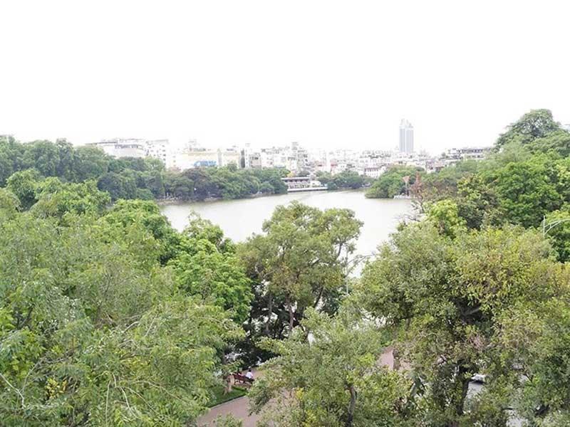 Chủ tịch Hà Nội: Không có chuyện thay cây xanh Hồ Gươm - 1