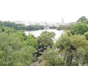 Tin tức trong ngày - Chủ tịch Hà Nội: Không có chuyện thay cây xanh Hồ Gươm