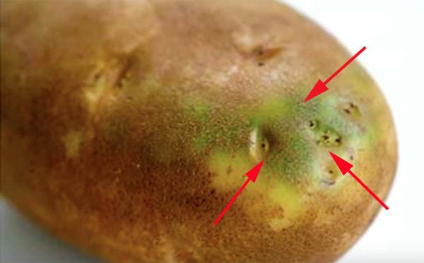 Tại sao dễ chọn nhầm khoai tây độc trong siêu thị? - 2