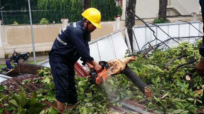 Nhánh cây cổ thụ xuyên thủng 2 ki ốt, nhiều người tháo chạy - 2